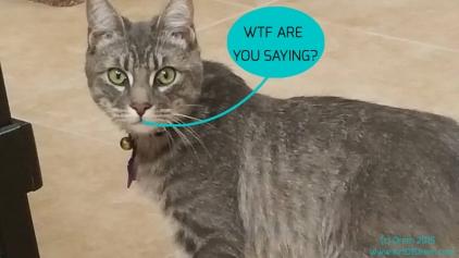 sorrycat2