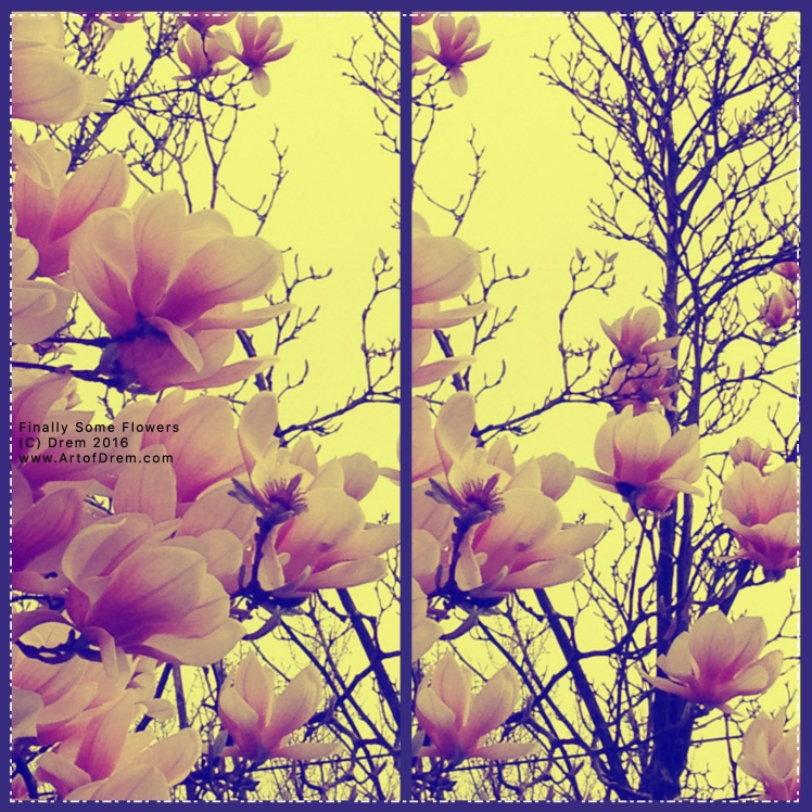 finallyflowers_Fotor